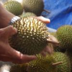 Cara Mudah Cari Buah Durian Yang Bagus Dan Enak