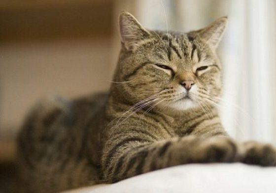 Kucing Tidak Mati Sembarangan