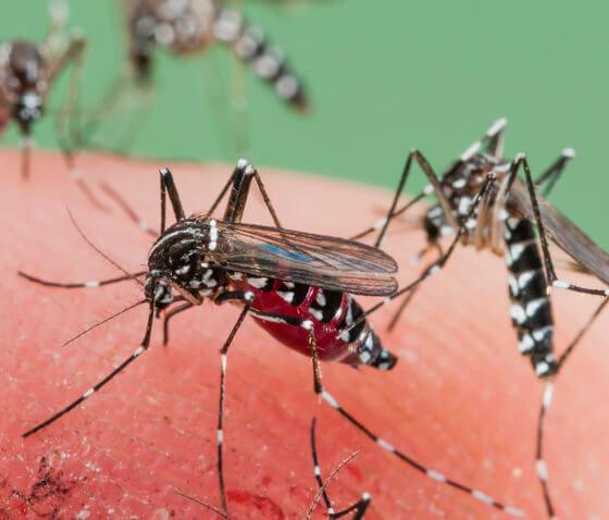 Tes Besar Vaksin Malaria Pertama Diluncurkan di Malawi